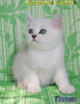 где продаются котята фото